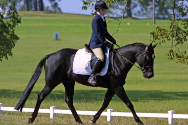 Dressage_Rucker_Equestrian_Center