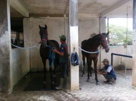 Kandang kuda Tradisional Indonesia 2