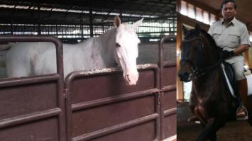 Kandang kuda Tradisional Indonesia 7 - modern